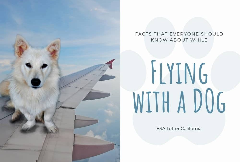 Tips to Fly With A Dog on Airlines
